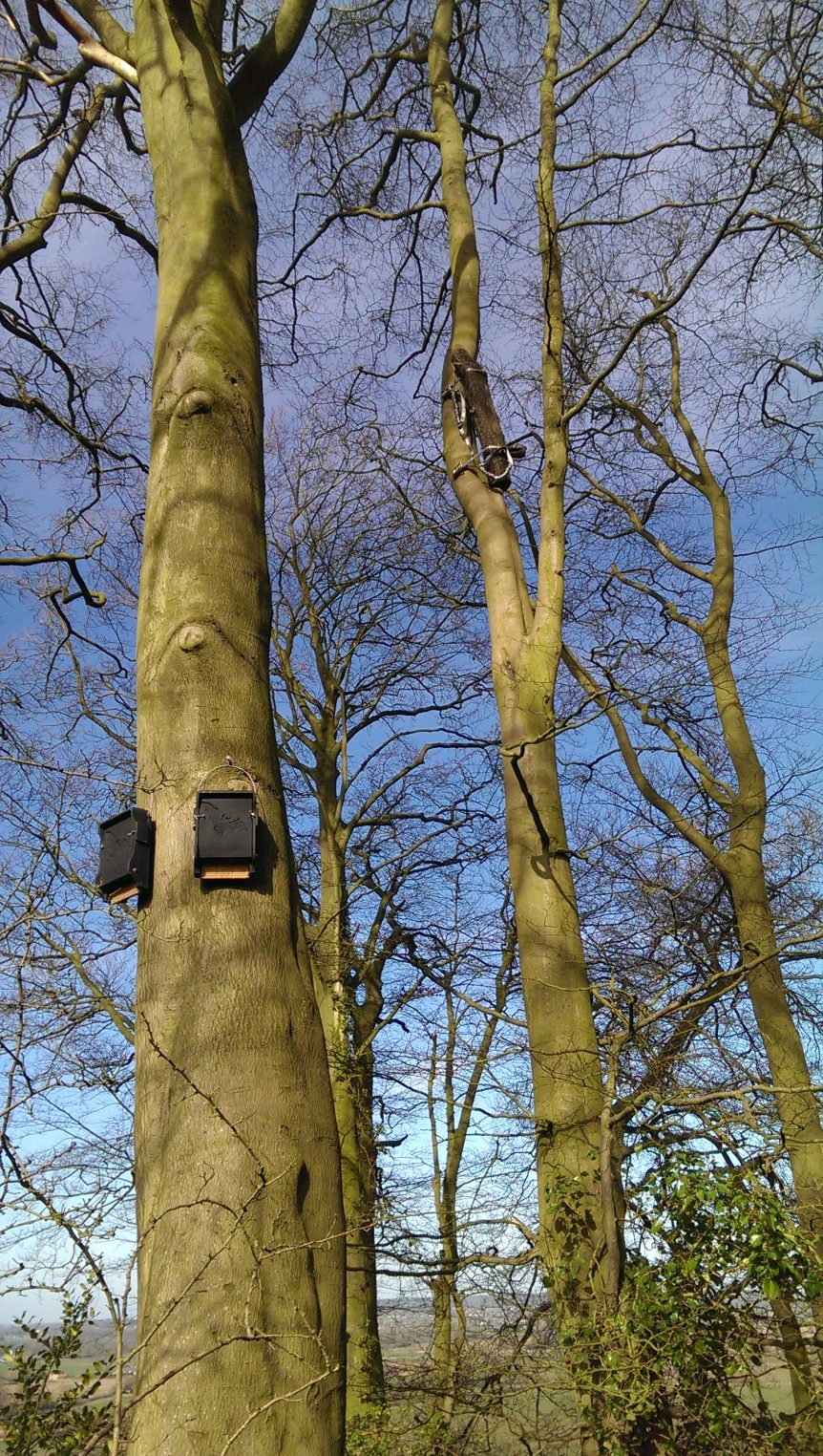 Bat boxes and translocated feature