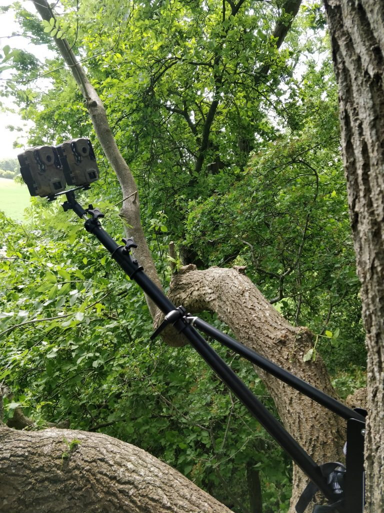 Improving the future for two tree-dwelling bat species - a trail camera setup